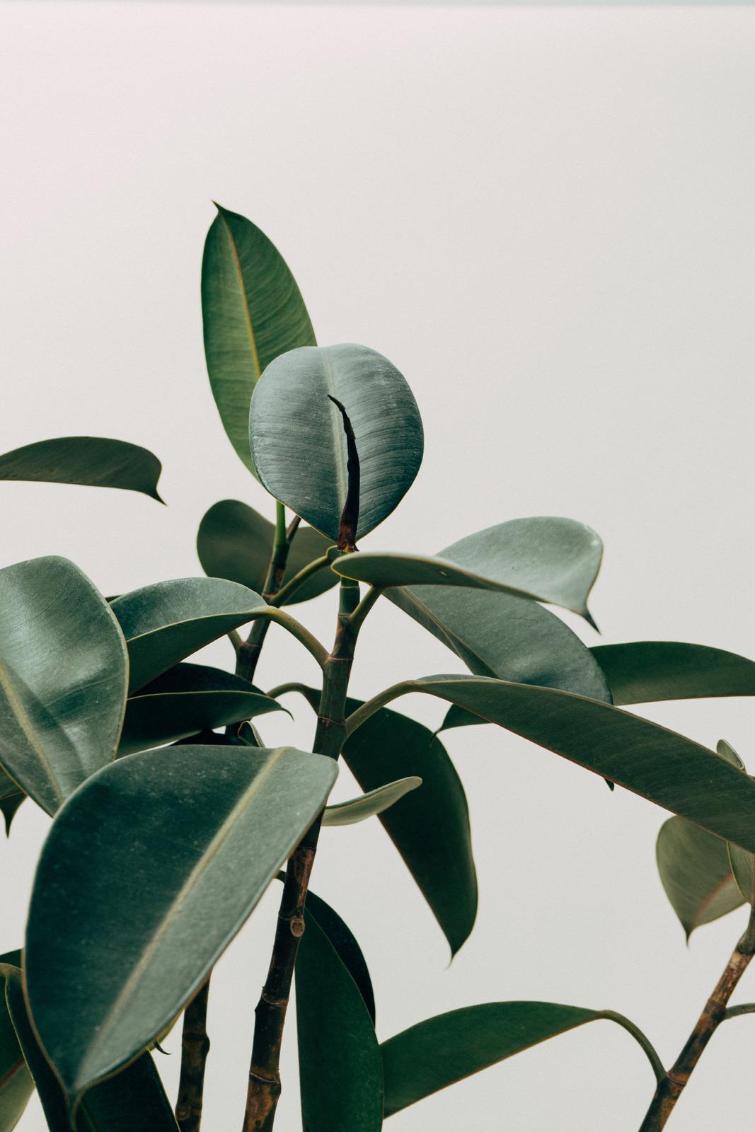 ellness Green Leafed Indoor Plant